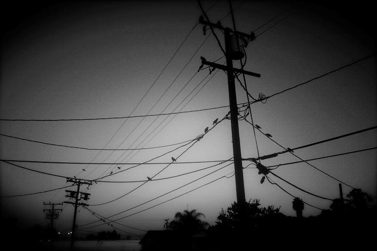 wire crows